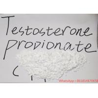 China USP36 Testosterone Steroid Hormone , Testosterone Propionate Powder Safe Pass 99% Purity wholesale