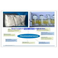 China Raw Material Testosterone Steroid Hormone Prop Testosterone Propionate for Muscle Gain wholesale