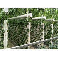 China 3 - 5m Gutter Height Plastic Panels Greenhouse Electric / Manual Rolling Up Vent Design wholesale