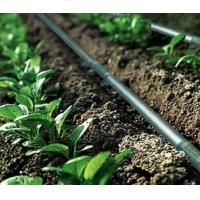 China Agriculture Drip Irrigation System Drip Tape ISO9001 factory wholesale