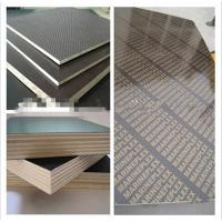 China hot sale wbp polar building plywood/hardwood building plywood with cheapest price on sale