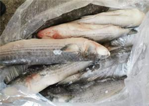 China Mugil Cephalus Cephalus 1400g Healthy Frozen Grey Mullet wholesale