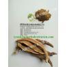 Buy cheap Reishi Mushroom Extract, 링 국의 버섯 추출물 분말, Chinese manufacturer supply, Polysaccha from wholesalers