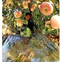 China 100 Micron Grape Peach ABS Hard Plastic Mulch Film For Greenhouses wholesale