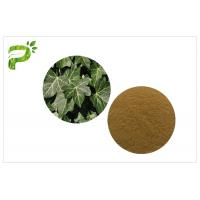 China Hedera Helix Hederacoside Plant Extract Powder Ivy Leaf Extract Treat Cough And Cold wholesale