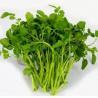China Nasturtium P.E./ Watercress Extract, stop coughing, diuresis, beneficial to brain, treat dysphoria, 10:1, herbs extract wholesale