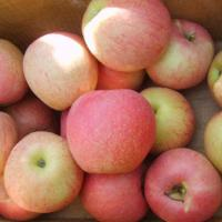 Buy cheap China Huaguan Apple,thin skin,sweet,from China from wholesalers