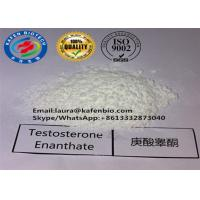 99% CAS 315-37-7 Testosterone Enanthate Powder / Muscle Building Testosterone