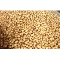 China Long Fresh Holland Potato Contains Vitamins / Minerals For Vegetable Fruit wholesale