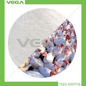 China Clostridium Butyricum Feed Additive wholesale