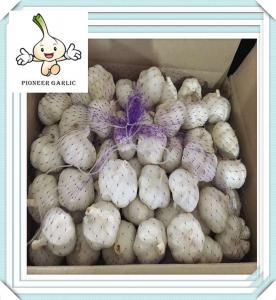 China 2015 crop good quality dired garlic powder china supplier price garlic on sale