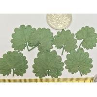 China Green Coffin Leaves Small Dried Flowers Diameter 2CM For Handsets Beauty on sale