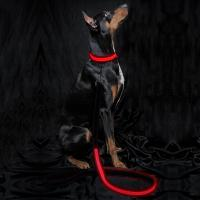 Buy cheap Neoprene Padding Reflective Light Up Dog Lead Safe For Night Walking from wholesalers