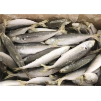 China 120g Whole Round High Protein Frozen Pacific Mackerel wholesale