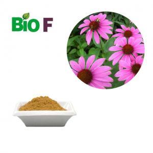 China Antifungal Animal Feed Additive / Echinacea Extract Powder 4% Polyphenols wholesale