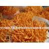 China Cordyceps Sinensis Extract,Polysaccharides 15%, Enhance immunity, Reishi Mushroom Extract ,Polysaccharides 30%, Chinese wholesale