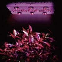 China 1000W hydroponic growing system Noah 6S high power cob led light for indoor greenhouse wholesale