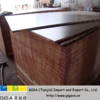 China Giga 13mm, 15mm, 18mm Building Plywood on sale
