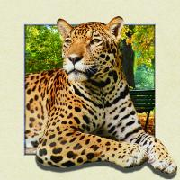 China 5d Animal Collage Poster Of 15.7x15.7 Inches Custom Lenticular Printing For Gift. wholesale