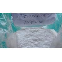 China High Purity Testosterone Propionate Raw Testosterone Powder / Injectable Liquid  CAS 57-85-2 wholesale