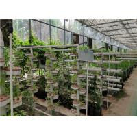Glass Cover Hydroponic Greenhouse Simple Structure With Large Inner Room