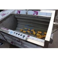 China 304 SUS Brush Roller Root Industrial Vegetable Washer 1.1kw 380v 700kg/H Capacity wholesale