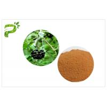 China High Purity Plant Extract Powder Siberian Ginseng Eleutherococcus Eleutheroside B / E wholesale