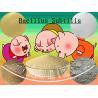 China Off white Microecologics Bacillus Subtilis Probiotic Feed Additives SEM-BS20BI wholesale