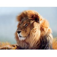 China Strong Lion Plastic 3D Print Service Animal Designs 420mm × 594mm wholesale