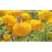 China Marigold P.E ,  Lutein  10% 20% 80%  natural colorant , antioxidant, Chinese exporter, CAS NO.: 127-40-2, eyes protect wholesale