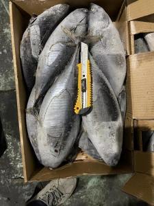 China Bulk 500g up  Auxis Thazard Freezing Bonito Fish for export wholesale