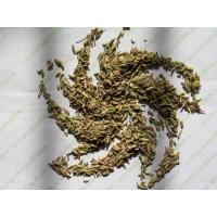 China Cumin seed Fennel Fenouil Fennel seeds fruits Foeniculum vulgare Mill Hui xiang zi on sale