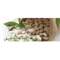 White Kidney Bean Extract, Extrato de Feijão Branco,3000 Unit/g, 1%Phaseolamin