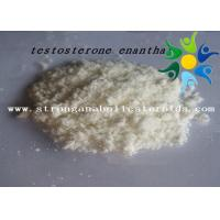 China Raw Test E Powder Testosterone Anabolic Steroid Testosterone Enanthate CAS 315-37-7 wholesale