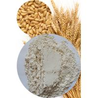 China Vital Wheat Gluten High Quality for Food Application 75% Min. (Nx5.7) wholesale