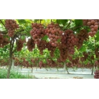 China Reflective Metalized PE Film Apples Grapes Biodegradable Shrink Film wholesale