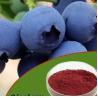 China Natural Pterostilbene Nootropics Powder CAS 537-42-8 1% Anthocyanidins wholesale