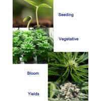 4 growing stage