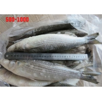 China Whole Round Healthy BQF 500g 1000g Frozen Grey Mullet wholesale