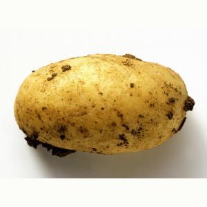China 2018 Chinese Fresh Potato,HollandPotato in Mesh Bag wholesale