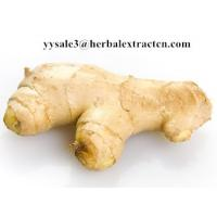 China Ginger Extract,Black ginger Extract, Gingerol 5% 6% HPLC, 10:1, CAS No.: 1391-73-7, blood stimulant and cleansing,nature wholesale