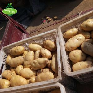 China Fresh Potato Seller,2018 New Crop wholesale