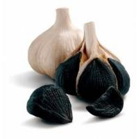 China black garlic extract,aged black garlic extracts,black garlic supplement,black garlic powder wholesale