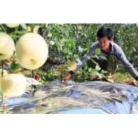 China 12 Micron Metalized PE Film For Fruit Tree Greenhouse wholesale