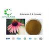 China HerbPowder EchinaceaExtract CAS 70831 56 0HighPurityPowder wholesale