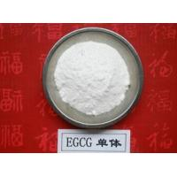 China 100% Natural Green Tea Extract Polyphenols and EGCG 98% wholesale