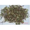 China Trachelospermum jasminoides(Lindl.) Lem.whole plants,Luo Shi,Chinese herb wholesale