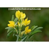 China DMF Cytisine 98%HPLC,  CAS No.: 485-35-8,White or pale yellow powder, natural ingredient, Shaanxi Yongyuan wholesale