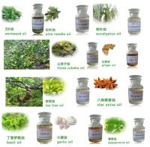 China Essential oil,organic essential oil,pure natural essential oil wholesale