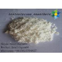 China CAS 315-37-7 Testosterone Enanthate Test E Powder Legal Bodybuilding Supplements wholesale